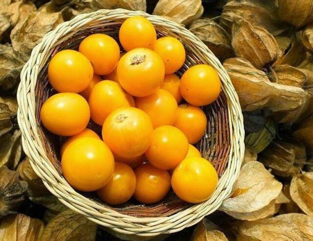 50//100 Pcs Physalis Peruviana Fruit Seeds Courtyard Plant Bonsai For Jam Сocktai