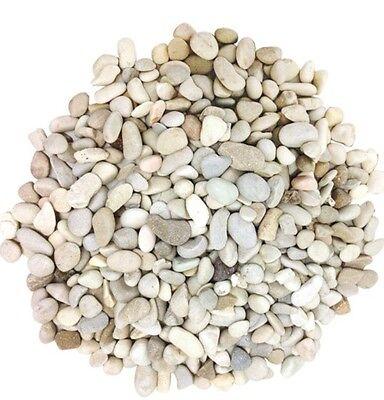 Stones Pebbles 100 Grams Of Cream Assorted 9 - 12mm Terrarium Bonsai Plants
