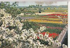 BF30015 tulipshow frans roozen vogelenzang  netherland  front/back image