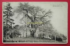 CPA JAPON KYOTO JAPAN old postcard cherry blossom at maruyama park cerisiers