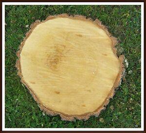 Baumscheibe birke rund durchmesser ca 25 cm x 4 cm for Holzscheibe rund