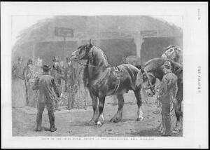 1886-Antique-Print-LONDON-Islington-Agricultural-Hall-Shire-Horse-Show-214