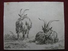 Radierung von Nicolaes Berchem: Ziegenböcke 1660/Etching He-Goats with long Horn