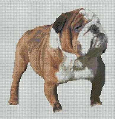 """Bulldog Bull Dog Puppy Counted Cross Stitch Kit 8/"""" x 8/"""" Free P/&P"""