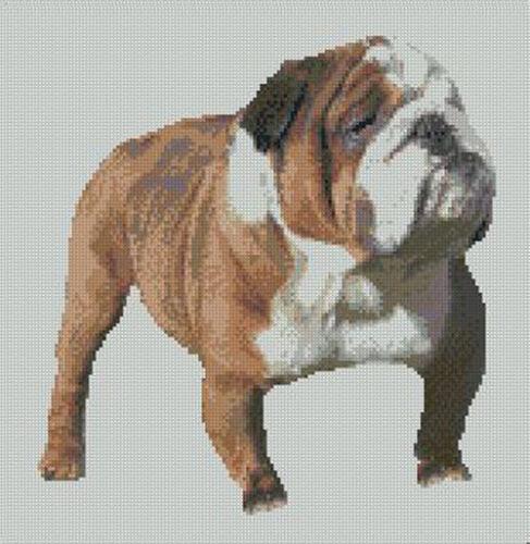 "Bull Dog Bulldog Counted Cross Stitch Kit 11/"" x 11.25/"" 27.9cm x 28.9cm D2244"