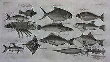 Original antique print, WEST AFRICAN FISH,  SOUTH GUINEA, Barbot, Kip, 1746