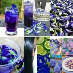 100g-Thai-Pure-Natural-Dried-Butterfly-Pea-Blue-Flowers-Healthy-Drink