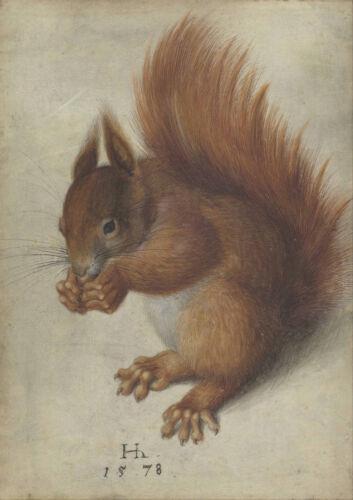 Hans Hoffmann 4098 Red Squirrel Art Print//Poster