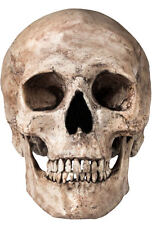 Framed Print - Human Skull (Picture Medical Anatomy Pathology Doctor Gothic Art)