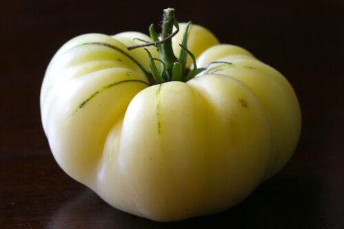 25 SEMI TOMATO PLUMP WHITE