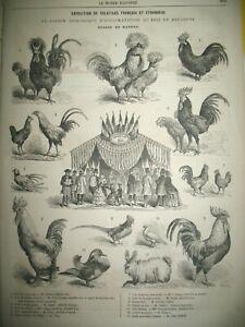 EXPEDITION-MEXIQUE-SANTA-ANNA-FETE-INDIENNE-EXPOSITION-GALLINACeS-GRAVURES-1863