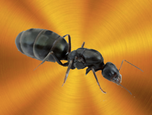 LOW-MAINTAINENCE-EASY-CARE-INSTANT-PET-Pavement-Ant-Queen-ONLY-5