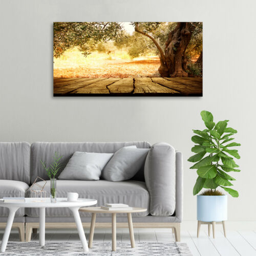 Glas-Bild Wandbilder Druck auf Glas 100x50 Deko Landschaften Olivenbaum