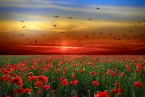 Landscape-Flowers-Poppies-Sky-Clouds-Sunset-Birds-CANVAS-WALL-ART-034-20x30-034-inches