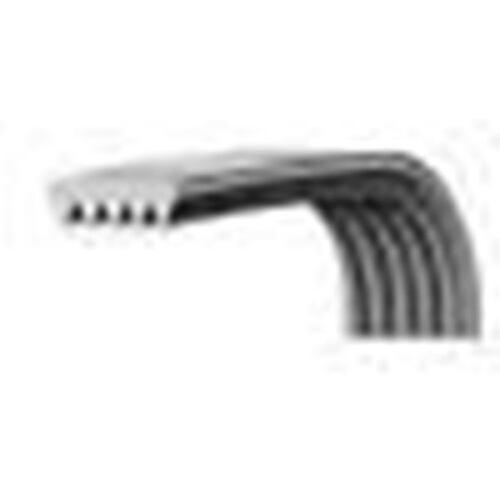 Cinghia Lavatrice Dentata EL 1287 H8 Megadyne Universale per Varie Marche