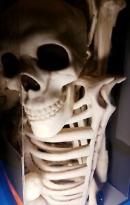 4-Feet-Groundbreaker-Skeletons-2-with-Stakes-for-Halloween-Yard-Decorations
