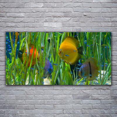 Acrylglasbilder Wandbilder aus Plexiglas® 120x60 Korallenriff Natur