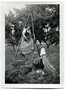 Photo Gilletta - La Cueillette du Mimosa - Tirage argentique d'époque - - France - Type: Tirage argentique Couleur: Noir et blanc Format (cm): 13 x 18 Nombre de pices: 1 Période: De 1900 1939 Authenticité: Tirage original - France