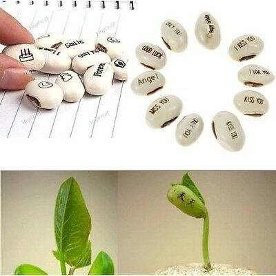 20pcs Peculiar Love Magic Bean Seeds Gift Plant Growing Message Word White HOT Y