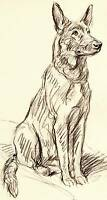 Authentic Vintage Dog Print 1937 Lucy Dawson Original Art