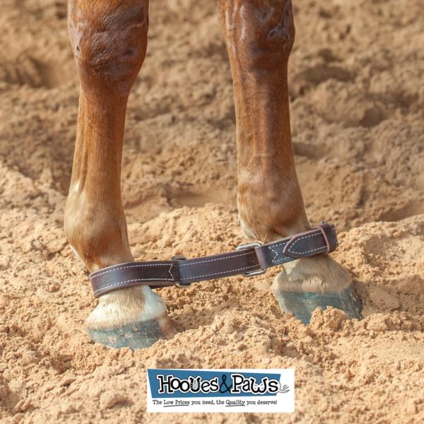 Ben Informato Martin Saddlery Forte Resistente Latigo Zoppicamento Cavallo Sapore Puro E Delicato