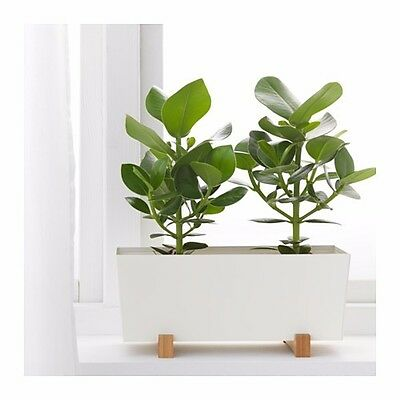 Ikea BITTERGURKA Plant Pot Planter White And Natural 15cmH