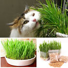 New harvested cat grass 1oz/approx.700 seeds 100% organic including guide