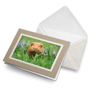 Greetings-Card-Biege-Cute-Ginger-Guinea-Pets-Animals-Fun-8558