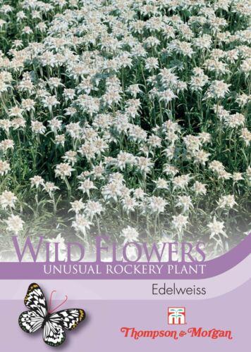 250 Semi Thompson /& Morgan-Fiori-Fiori Selvatici Edelweiss