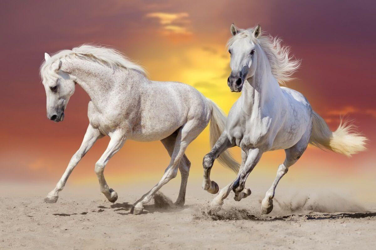 3D Animal horse Weiß art Wall Stickers Vinyl Murals Wall Print Deco AJSTORE UK
