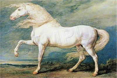 VINTAGE VICTORIAN WHITE HORSE EQUESTRIAN CANVAS ART