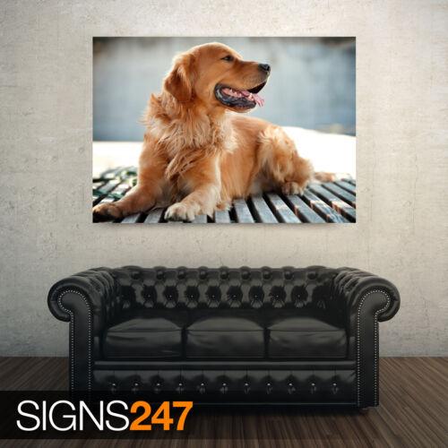 GOLDEN RETRIEVER DOG Animal Photo Picture Poster Print Art A0 A1 A2 A3 A4 3809