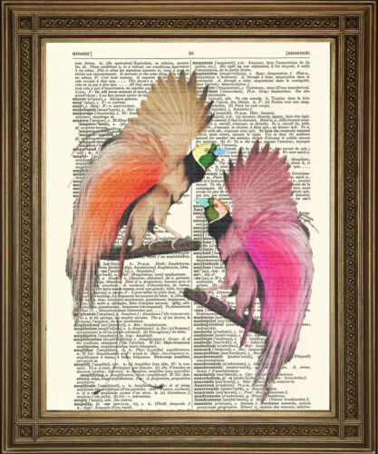 """Exotic Pink Birds of Paradise Vintage Antique Art 8x10/"""" DICTIONARY PAGE PRINT"""