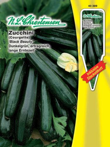 40389 ca rankend Zucchini /'Black Beauty/' Cucurbita pepo 3 Samen