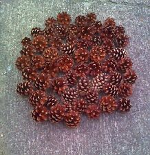 75 Kiefernzapfen / Tannenzapfen für Adventskranz / Weihnachtsdeko Naturmaterial