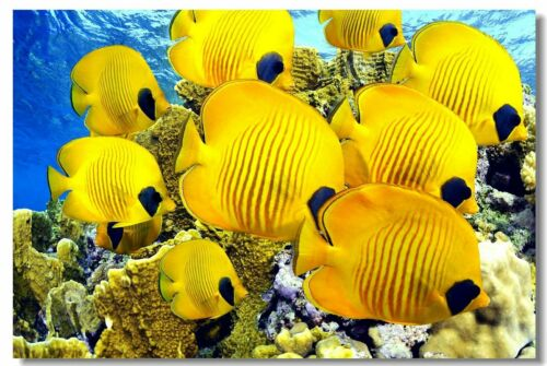 Poster Fishes Coral Reef Many Colorful Tropical Underwater Cloth Print 18