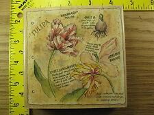 Rubber Stamp Botanical Journal Stamps Happen Flowers Script Stampinsisters #2402