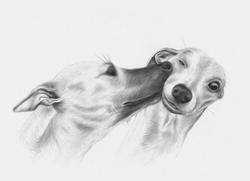 whippet greeting card birthday greyhound lurcher sighthound love fathers day