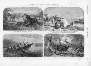 1874-Antique-Print-LIVINGSTONE-Dr-Travels-Lion-Lake-Ngami-Oswell-Hippo-193