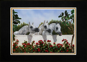 Matted-3-Arabian-Mares-Horse-Art-Print-034-The-Line-Up-034-11-034-x14-034-Mat-by-Roby-Baer
