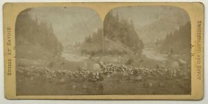 Suisse Col Da Balme Foto A. R. Vintage Stereo Albumina