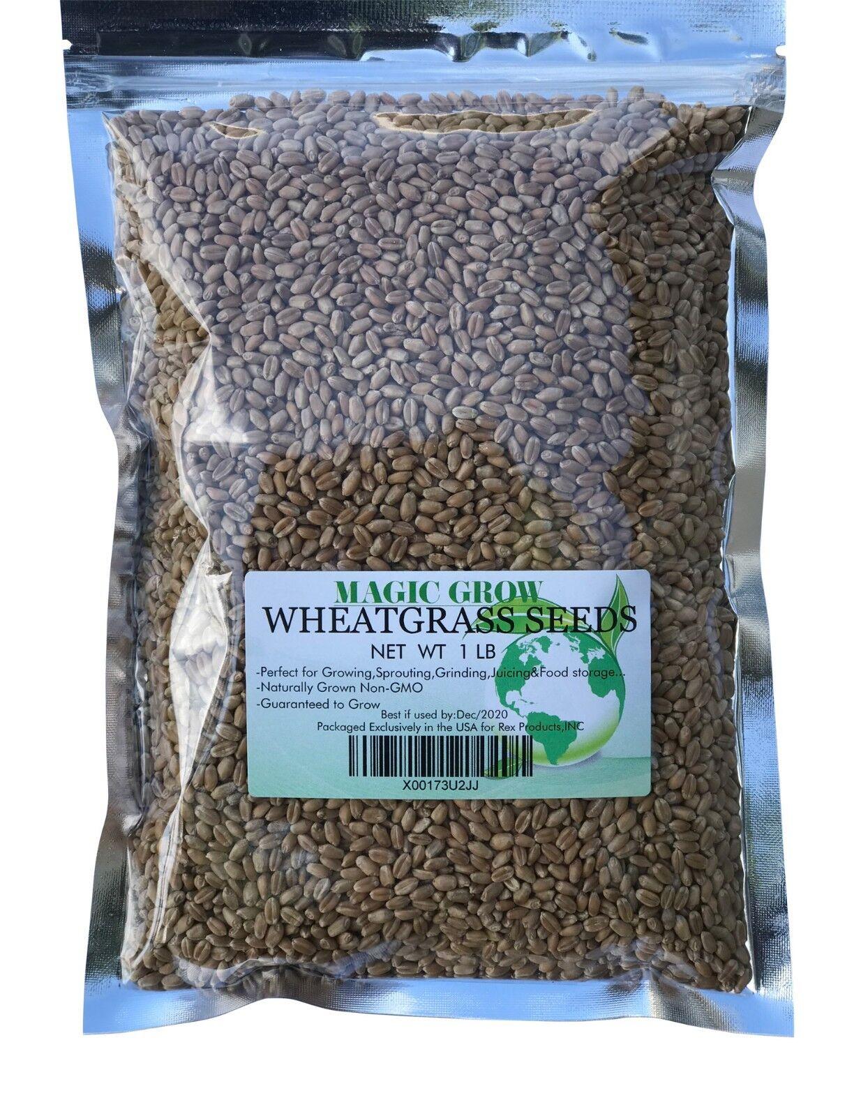 Best Grass Seed 2020 500 Seeds Panicum maximum. Buffalo grass Seeds. Guinea grass Seeds