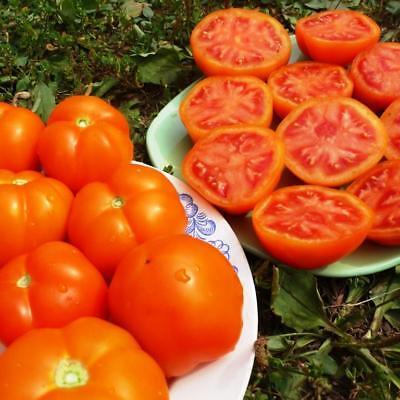 Tomato De Barao Red seeds red tomatoes organic seeds Ukraine 1g ...
