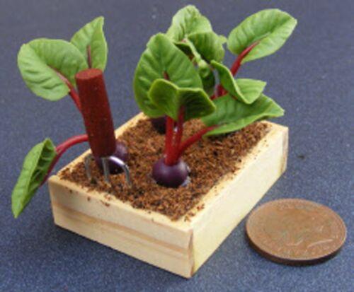 Escala 1:12 Caja de 4 Tiras /& una herramienta de plantación tumdee Casa De Muñecas vegetal