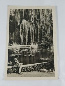 Vintage-Foreign-Real-Photo-Post-Card-Girl-At-Pond-Undivided-Back-1960-Hungary