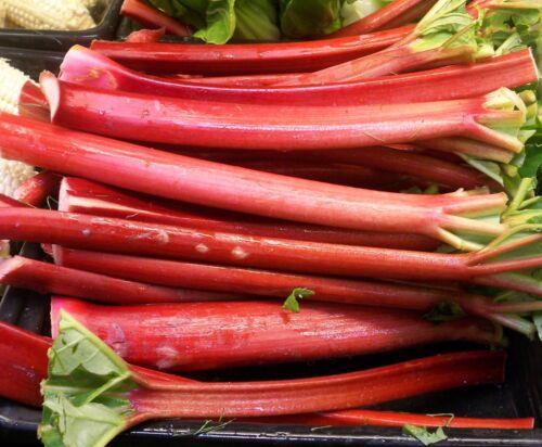 25-200 seeds Rhubarb VICTORIA Heirloom tastes great fresh or Pie Jam sauce