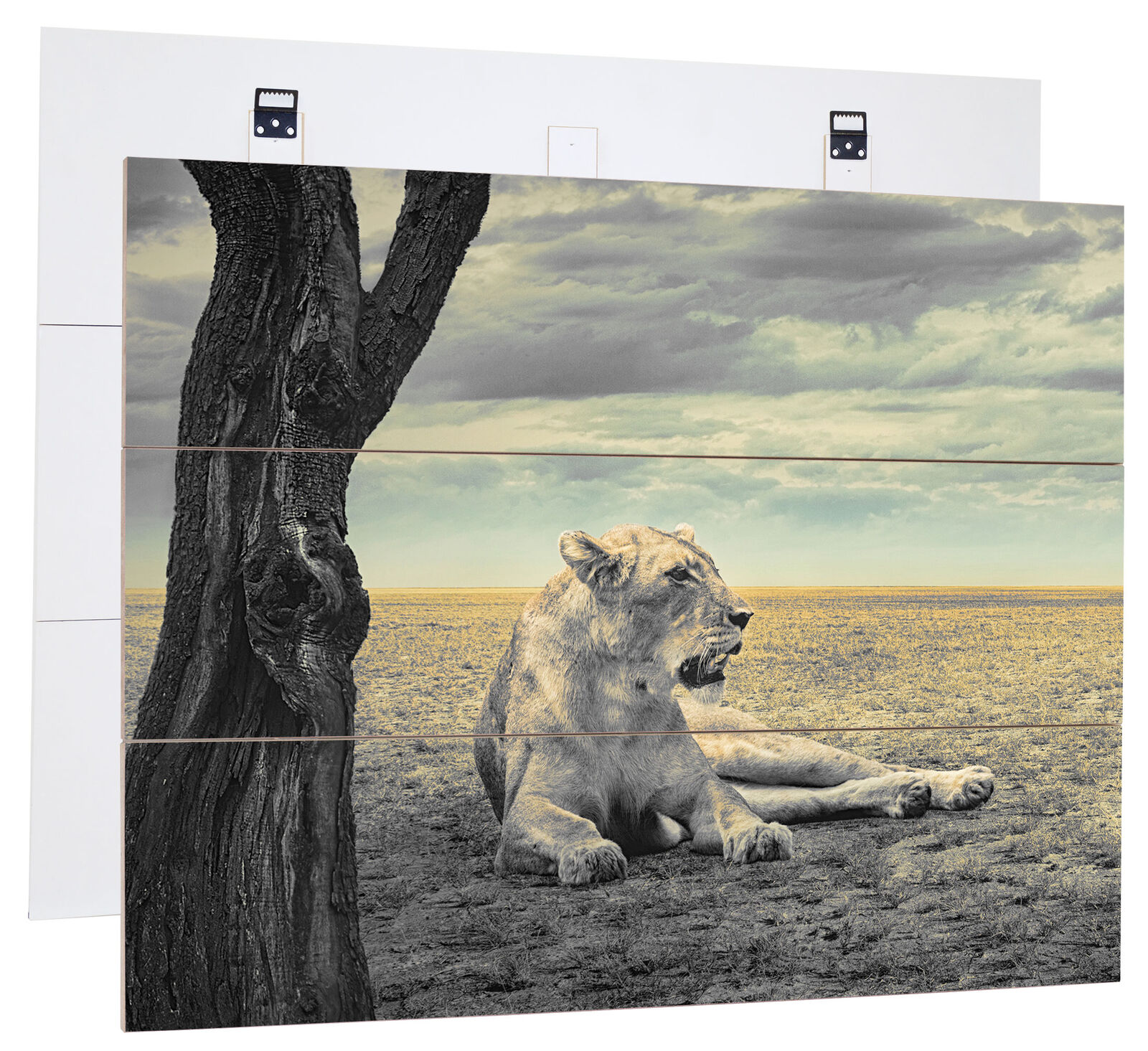 Lionne Calme Savannah B&w Détail - Authentique Mdf-Holzbild Bretterlook,
