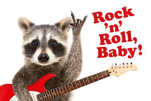 Rock 'N' N Roll Baby! Racoon Tin Sign Shield Arched 20 X 30 CM