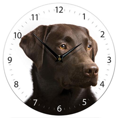 Beautiful Chocolate Labrador Dog on White Dial Wall Clock