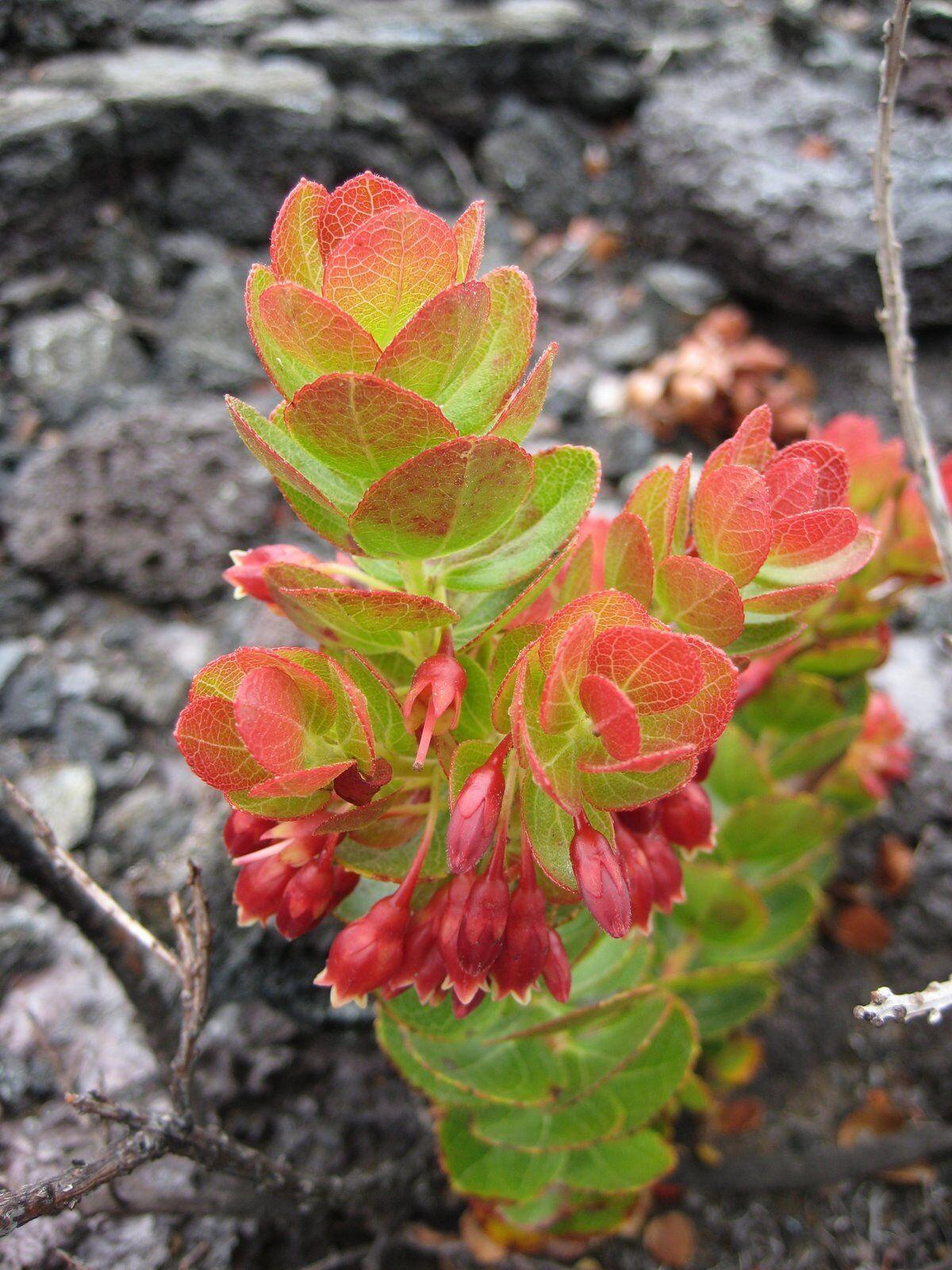 3D Gestein Pflanzen 86 Tapete Wandgemälde Tapete Tapeten Bild Bild Bild Familie DE Summer | Mama kaufte ein bequemes, Baby ist glücklich  0a4084